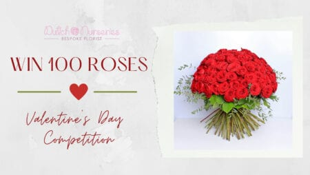Red Roses on Valentine's Day